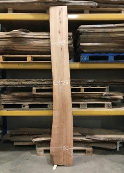 Elm 026 timber
