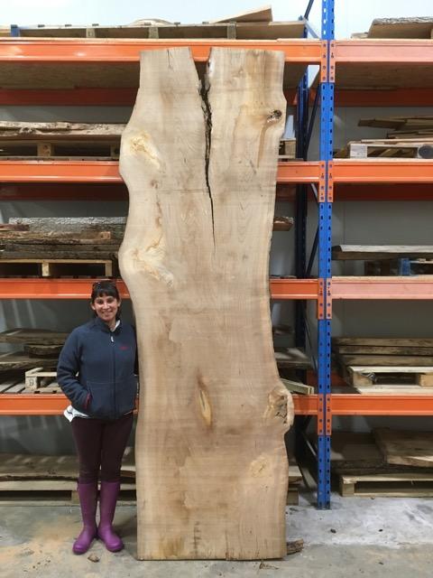 Elm 046 timber plank